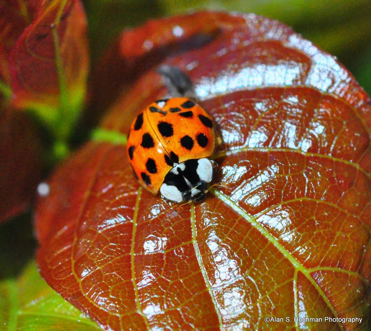 """""""Ladybug on leaf in Enchanted Forest Park"""""""
