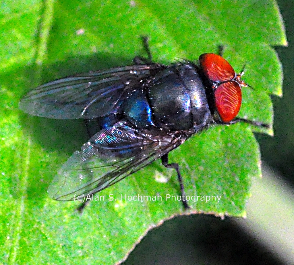 """Closeup of a Fly at Enchanted Forest Park"""
