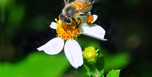 """""""HoneyBee at Arch Creek Memorial Park in North Miami, Florida"""""""