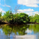 """Mangroves at Oleta River State Park"""