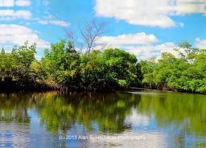 """""""Mangroves at Oleta River State Park"""""""
